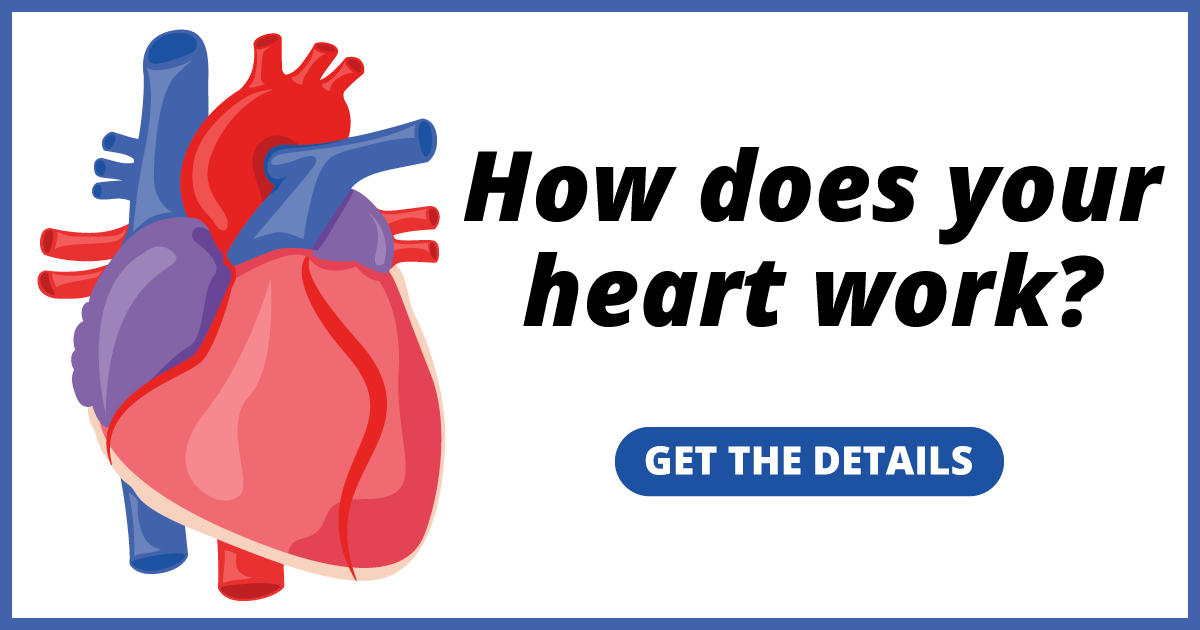 How does your heart work? Get the details