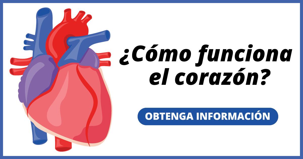 ¿Cómo funciona el corazón? Obtenga información