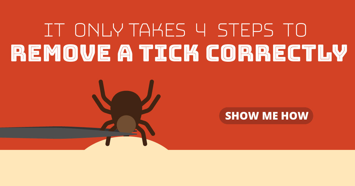 It only takes 4 steps to remove a tick correctly. Show me how.